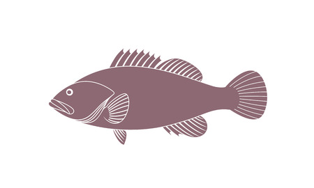 Spotted Grouper. Isolated grouper on white background Illustration
