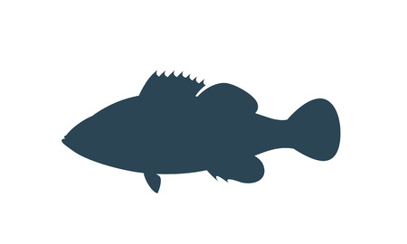 Spotted Grouper silhouette. Isolated grouper on white background Çizim