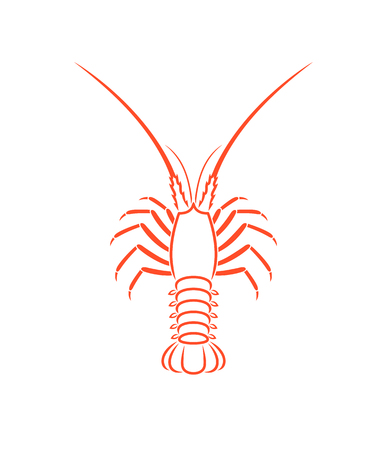 Spiny lobster outline. Isolated spiny lobster on white background
