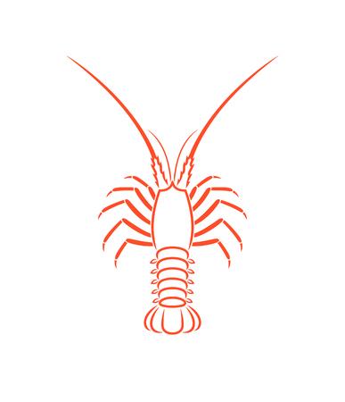 Zarys homara kolczasty. Na białym tle homar na białym tle
