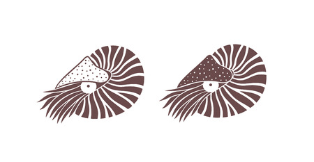 Nautilus shell. Isolated nautilus on white background