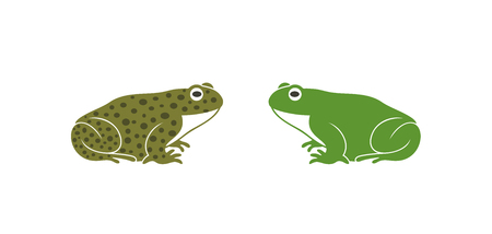 Green frog. Abstract frog on white background. Bufo Common European Toad