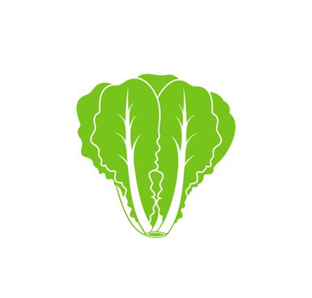 Römersalat. Isolierter Salat auf weißem Hintergrund. Logo Logo