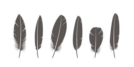 Isolated feathers on white background Ilustrace