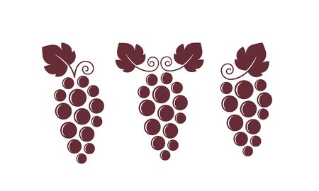 Wine grapes. Isolated grapes on white background