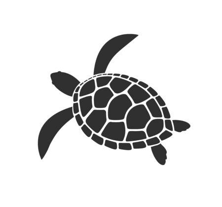 Tortuga marina. Tortuga aislada sobre fondo blanco. Reptil