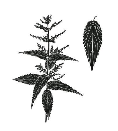 Nettle plant. Isolated nettle on white background Stock Illustratie