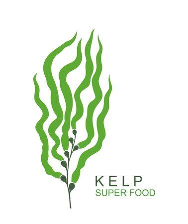 Isolated underwater seaweed kelp on white background Ilustração
