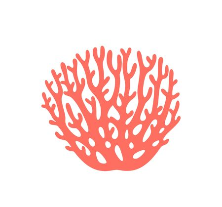 Isolated coral on white background