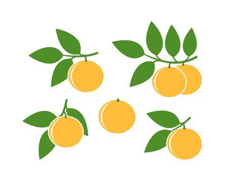 Grapefruit icon. Isolated grapefruit on white background