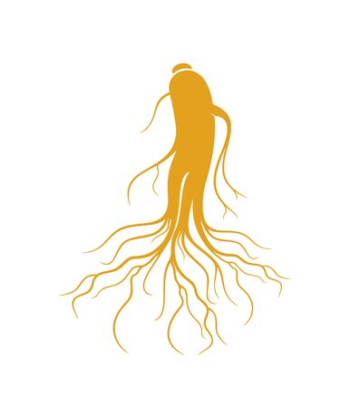 Ginseng root. Isolated ginseng on white background