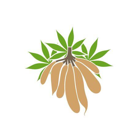 Cassava plant. Isolated cassava on white background