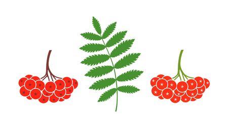 Rowan berries set. Isolated rowan on white background