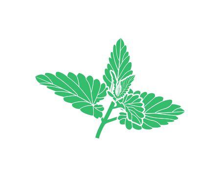 Mint logo. Isolated mint on white background Illusztráció