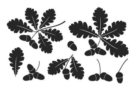 Oak leaf and acorns. Isolated oak on white background