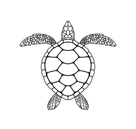 Sea turtle outline. Isolated turtle on white background. Reptile