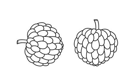 Custard apple outline. Isolated custard apple on white background