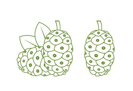 Noni fruit outline. Isolated noni fruit on white background Illustration