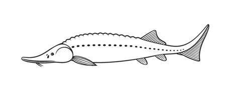 Sturgeon outline. Isolated sturgeon on white background Vettoriali