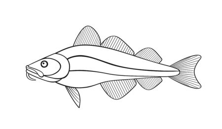 Atlantic cod outline. Isolated cod on white background