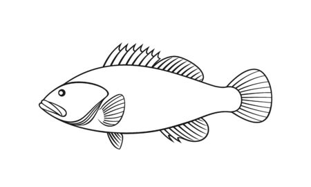 Spotted Grouper outline. Isolated grouper on white background