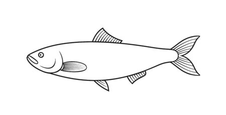 Herring outline. Isolated herring on white background Vettoriali