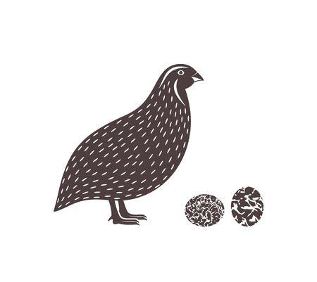 Isolated quail on white background Ilustracje wektorowe