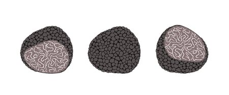 Truffle set. Isolated truffle on white background  イラスト・ベクター素材