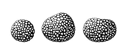 Truffle. Isolated truffle on white background