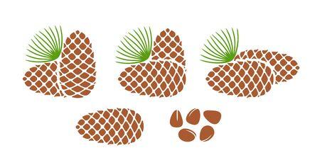 Pine nut. Isolated pine nut on white background. Cedar Иллюстрация
