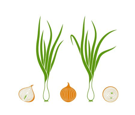 Onion. Isolated onion on white background