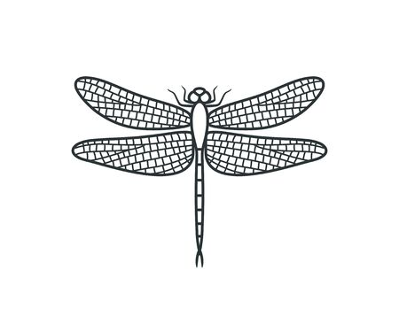 Dragonfly outline. Isolated dragonfly on white background