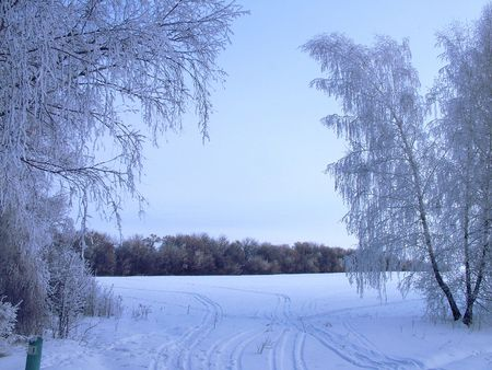 The nature winter new year