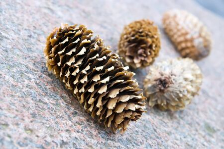 four pine cones. one in focus, three blurred