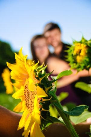Sunflower and blurred young couple on the background Stock Photo