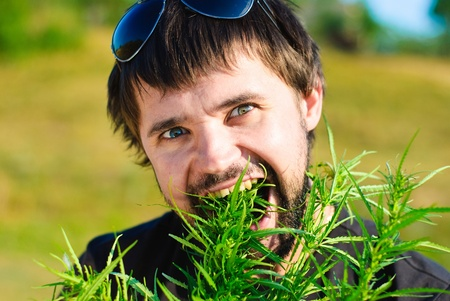 Young man eating leaves of hemp. Shoot in the field of marijuana. Stock Photo