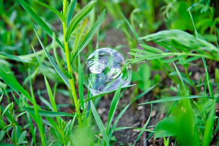 Bubble in the green grass