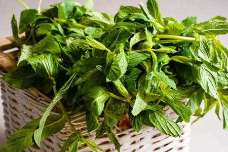 A bunch of fresh green mint. Close-up view. Stock Photo