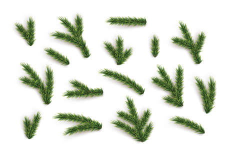 Fir tree branches and elements set. Vector green Christmas tree parts collection.