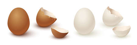 Egg and broken empty eggshell isolated on white background. Vector realistic white and brown eggs. Иллюстрация