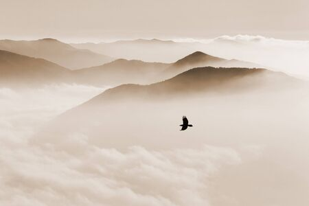 Silhouettes of mountains in the mist and bird flying in sepia toning