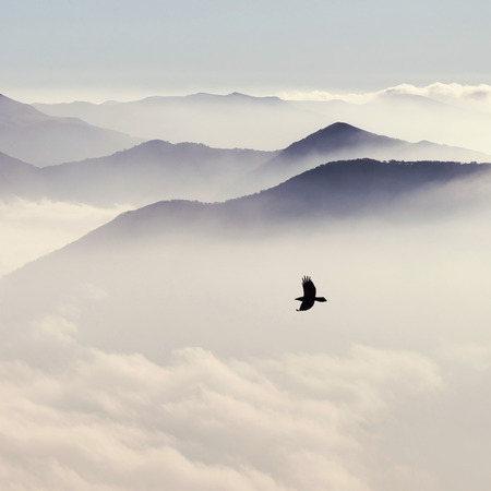 Silhouettes of mountains in the mist and bird flying in warm toning Stock Photo - 66286900