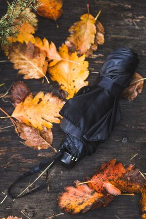 Black umbrella on colorful wet autumn leaves