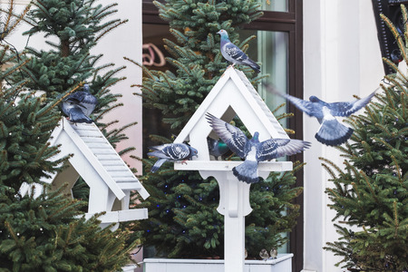 lovely outdoor bird feeders in fur trees decorations for christmas stock photo 69457709 - Outdoor Christmas Tree Decorations For Birds