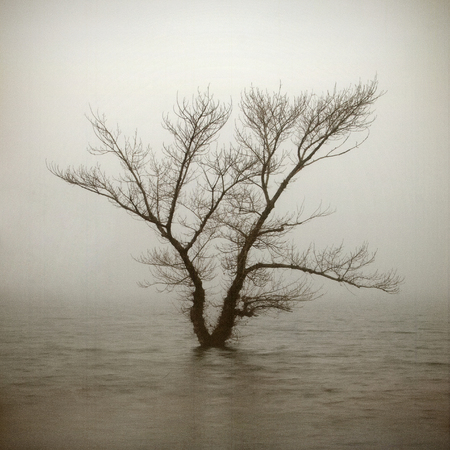 Lonely tree in aged textured art background. Depression and melancholy mood. Abstract loneliness and sadness. Shabby and vintage effect