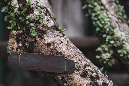 Empty wooden nameplate on tree. Vintage textured style and place for text, sign or logo. Eco and natural