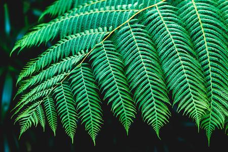 samui: Fern leaves texture on dark background Stock Photo