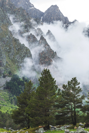 Enormi abeti rossi tra le montagne, alte vette coperte di nebbia e nuvole