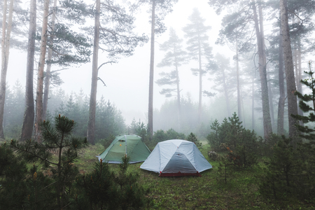 Two tent in foggy coniferous forest. Cold and wet misty weather in hike, overnight stay in camping 스톡 콘텐츠