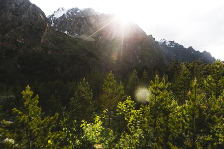 Belo pôr do sol nas montanhas, os raios do sol iluminam a floresta de abetos, a luz da noite quente Banco de Imagens